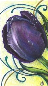Purpurrote Tulpe